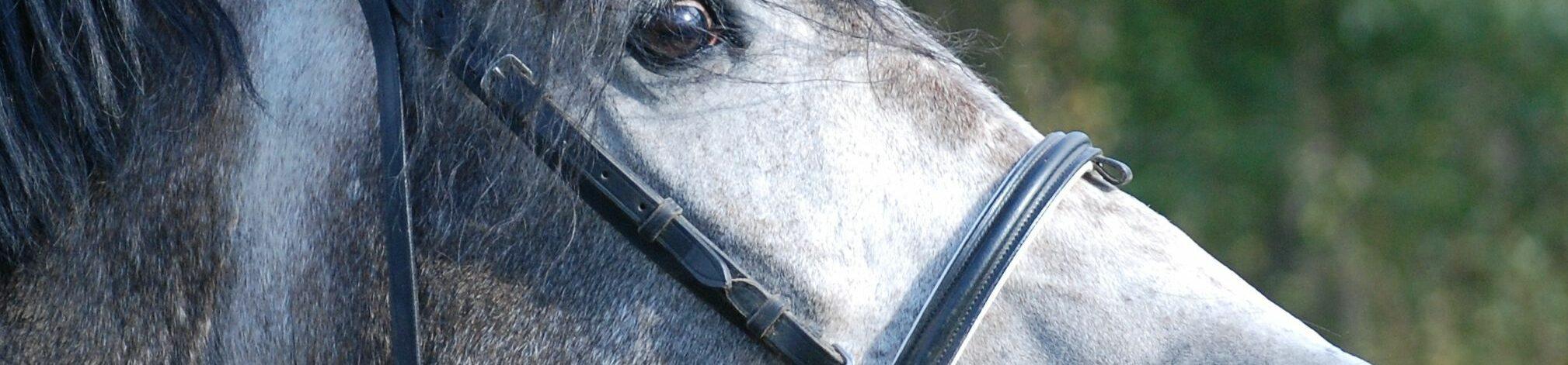 Hästvaruhuset
